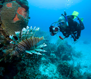 Grand Bahama Scuba Diving FAQ's