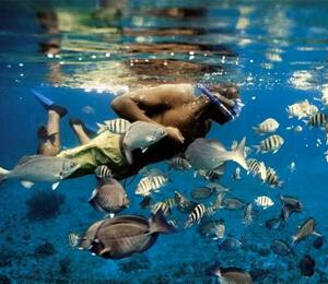 Grand Bahama Scuba Diving Trips